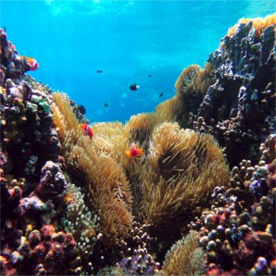 Mers et Océans: les effets du CO2