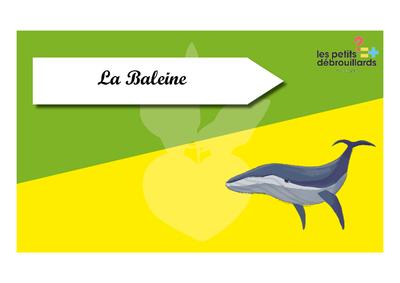 Time_s_up_des_esp_ces_du_littoral_La_baleine.png