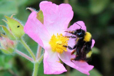 Services écologiques: zoom sur la pollinisation