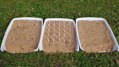 Plantes_au_secours_du_sol_et_des_dunes_Plantes_au_secours_du_sol_et_des_dunes__tape_2-6.jpg