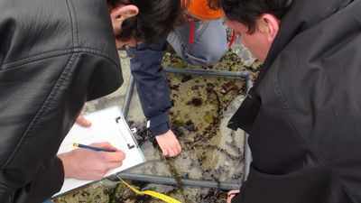 S_initier_aux_sciences_participatives_sur_le_littoral_Kreisker2011-2012-SortieStationBio-8.jpg